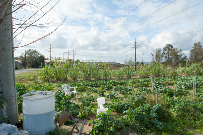 December 11, 2015 - The community garden in Africatown, Alabama grows collard greens, sugarcane, and other produce for local residents. Photo by Susana Raab/Anacostia Community Museum/Smithsonian Institution