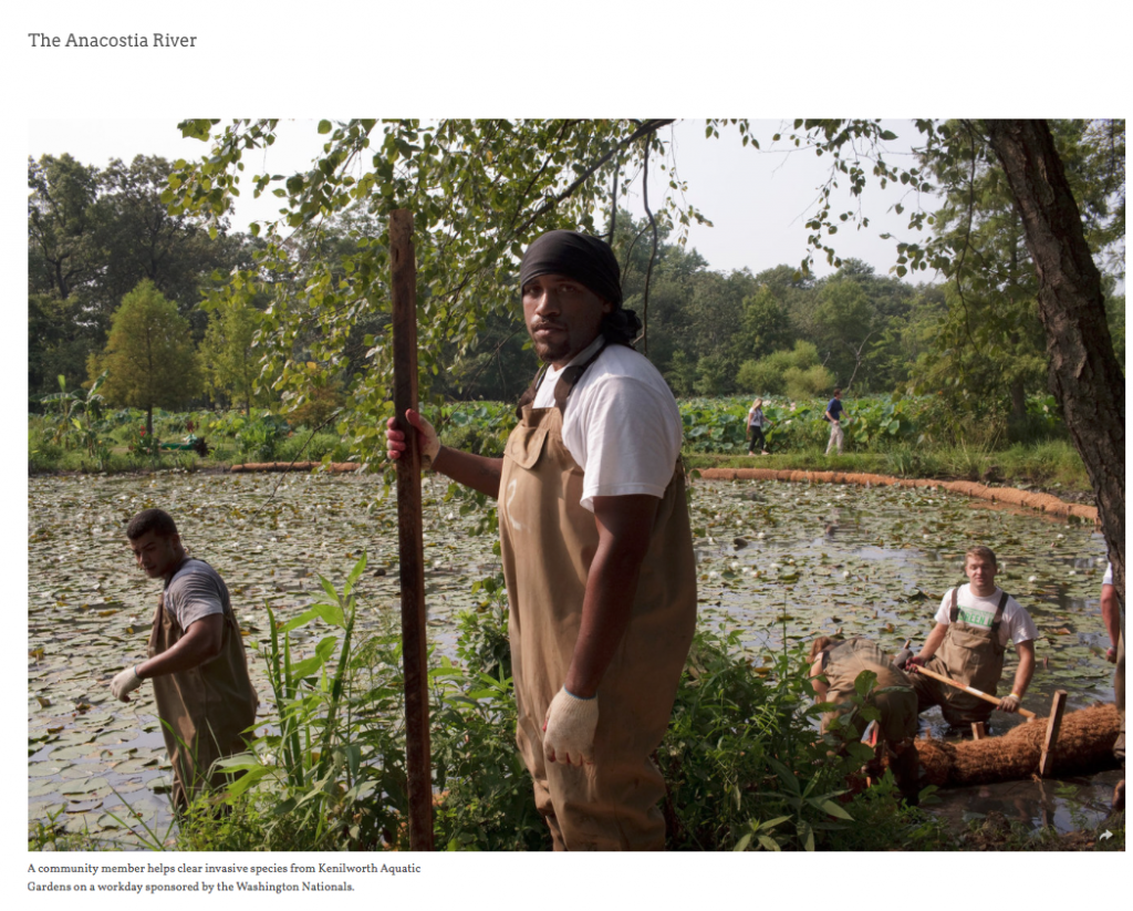 Photographer Becky Harlan's work on the Anacostia River. Here a clean-up crew at Kennilworth Aquatic Gardens.